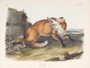 @ John James Audubon (790)