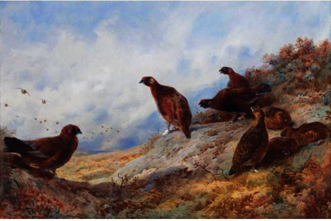 torneira e galinha red grouse high on the moor por Archibald Thorburn (1860-1935, United Kingdom) | Copy Pintura | ArtsDot.com