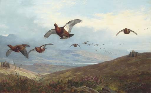 Grouse rodagem, tinta para aguarela por Archibald Thorburn (1860-1935, United Kingdom)