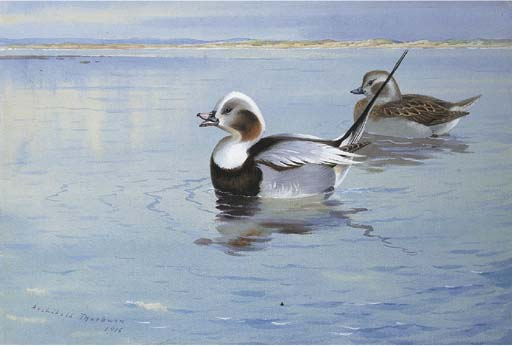 Patos longtailed, tinta para aguarela por Archibald Thorburn (1860-1935, United Kingdom)
