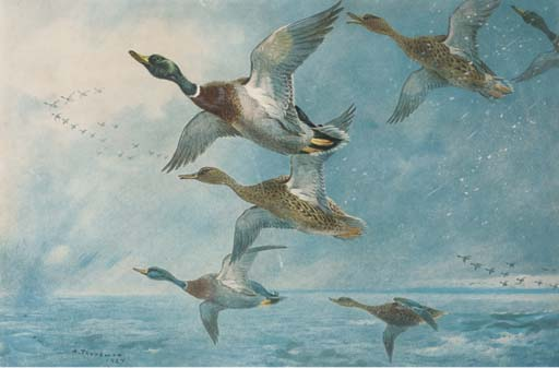 Patos selvagens; Gansos; Woodcock; Blackcock; Partridge; E Ptarmigan, tinta para aguarela por Archibald Thorburn (1860-1935, United Kingdom)