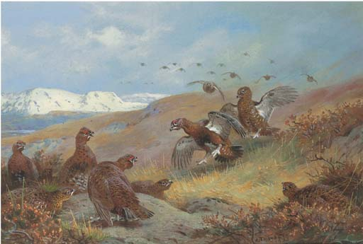 Red Grouse Por Moorland, tinta para aguarela por Archibald Thorburn (1860-1935, United Kingdom)