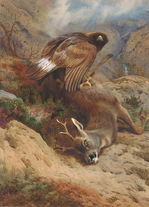 The Lost Roe, tinta para aguarela por Archibald Thorburn (1860-1935, United Kingdom)