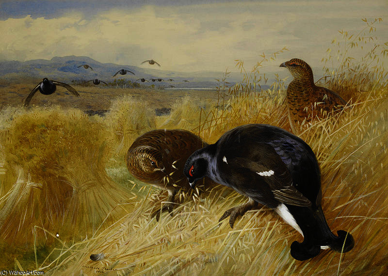 Nas stooks - Blackgame por Archibald Thorburn (1860-1935, United Kingdom)