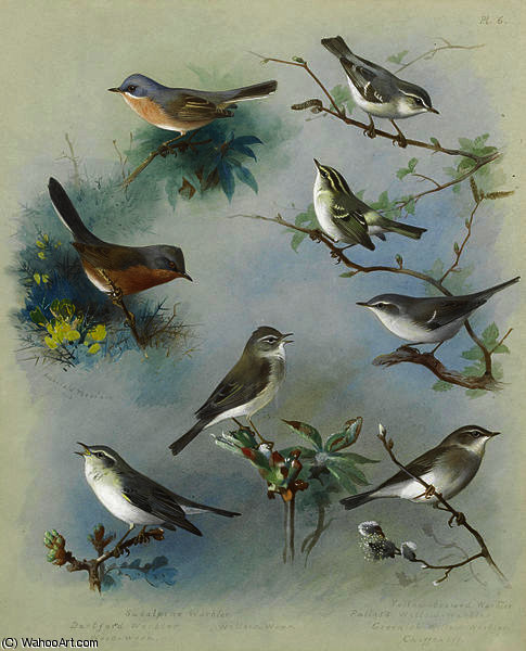 Toutinegra e Wrens por Archibald Thorburn (1860-1935, United Kingdom)