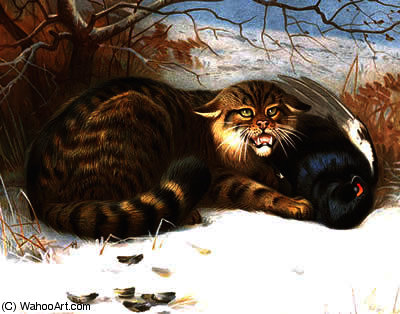 Wildcat thorburn por Archibald Thorburn (1860-1935, United Kingdom)