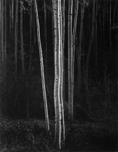 Ansel Adams - Untitled (362)