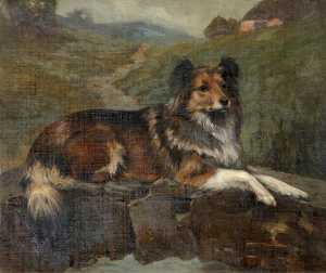 Thomas Hall - 'Tess' , uma Collie , Des..